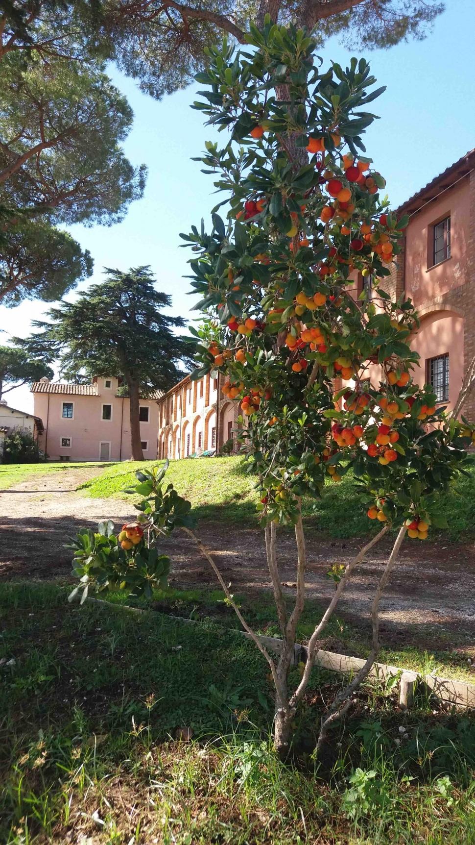 Giorgio Scavino user picture